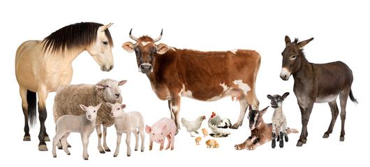 Farm Animals Together